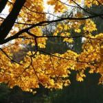autumn-194946_640