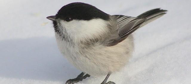 bird-100293_640