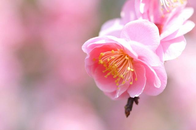 最大金利0.5% 新春まる芽定期・定積キャンペーンが1月12日からスタート【2016年1月29日まで】