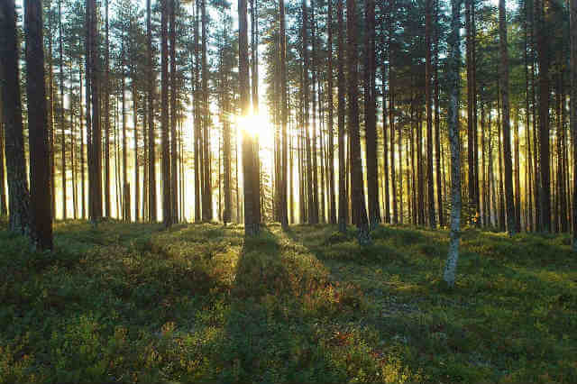 forest-964118_1280