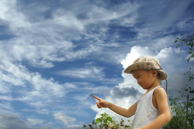 大阪商工信用金庫 サマーキャンペーンが7月1日からスタート【金利0.375%、7月29日まで】