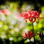 flowers-684371_640