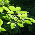 leaves-1688052_640