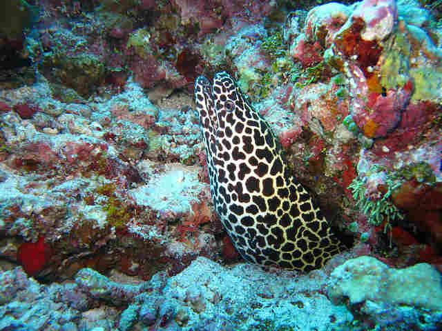 moray-eel-363626_640
