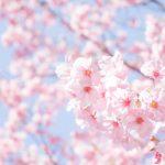 春の景色(桜)