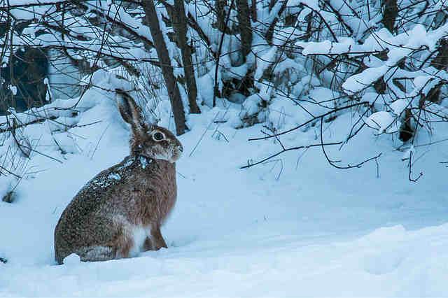 冬景色の中のうさぎ